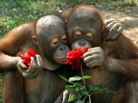 ΠΟΙΑ ΕΙΝΑΙ Η ΑΓΑΠΗΜΕΝΗ  ΜΥΡΩΔΙΑ????? Smell-roses