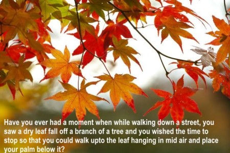 textfall-leaves