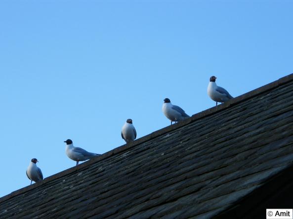 Birds Inline